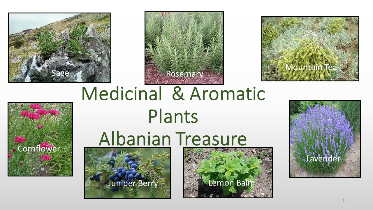 Medicinal & Aromatic Plants Albanian Treasure